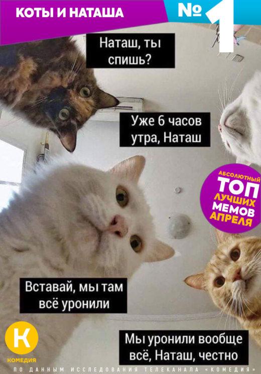 1 место. Коты и Наташа